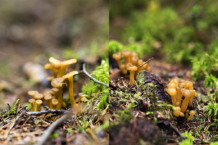 sienikeitto
