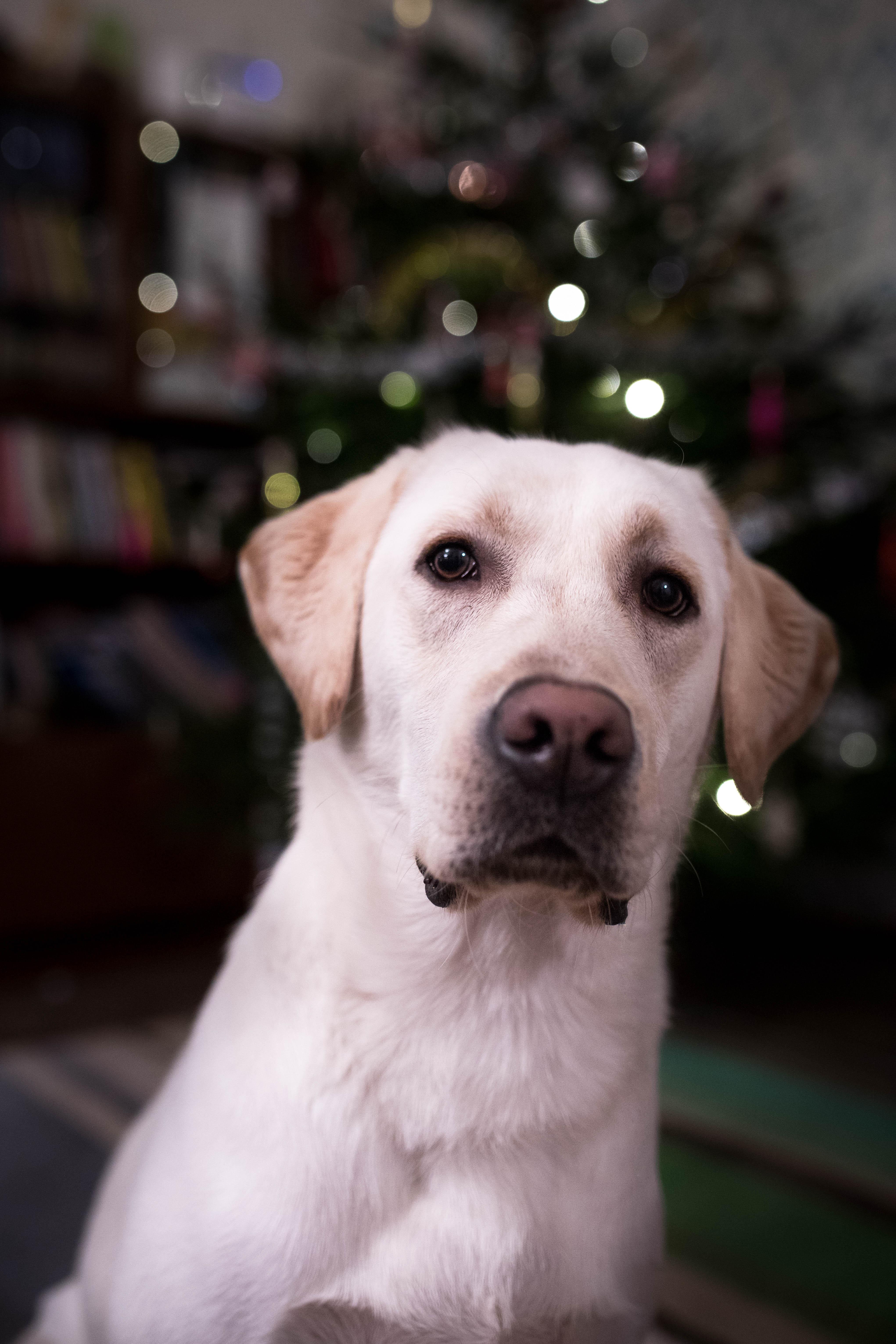 Toisen koiran hankinta | kaksi koiraa | koiralle kaveri