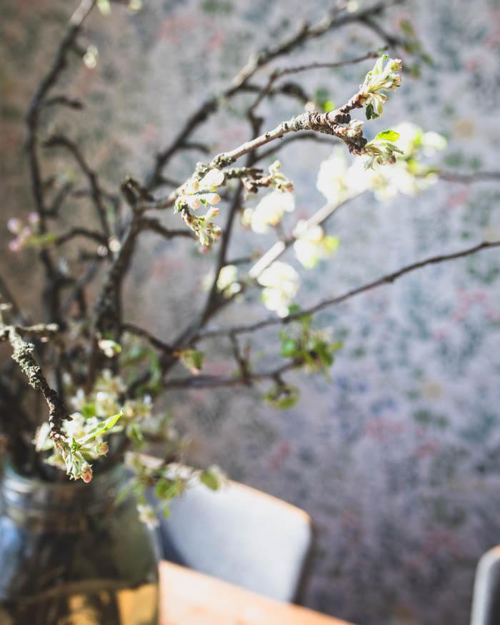 Ihanat omenankukat kukkivat maljakossa