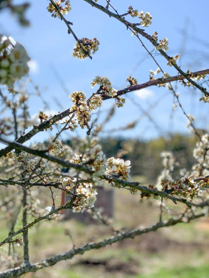 Puutarhan hoito toukokuussa – video