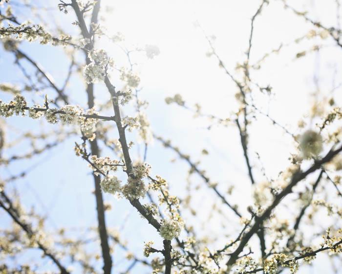 Kevään edistymistä -video